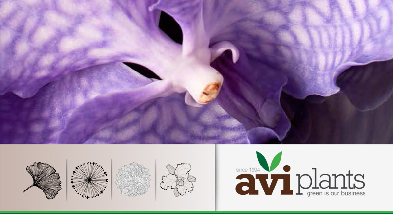 Brochure Aviplants